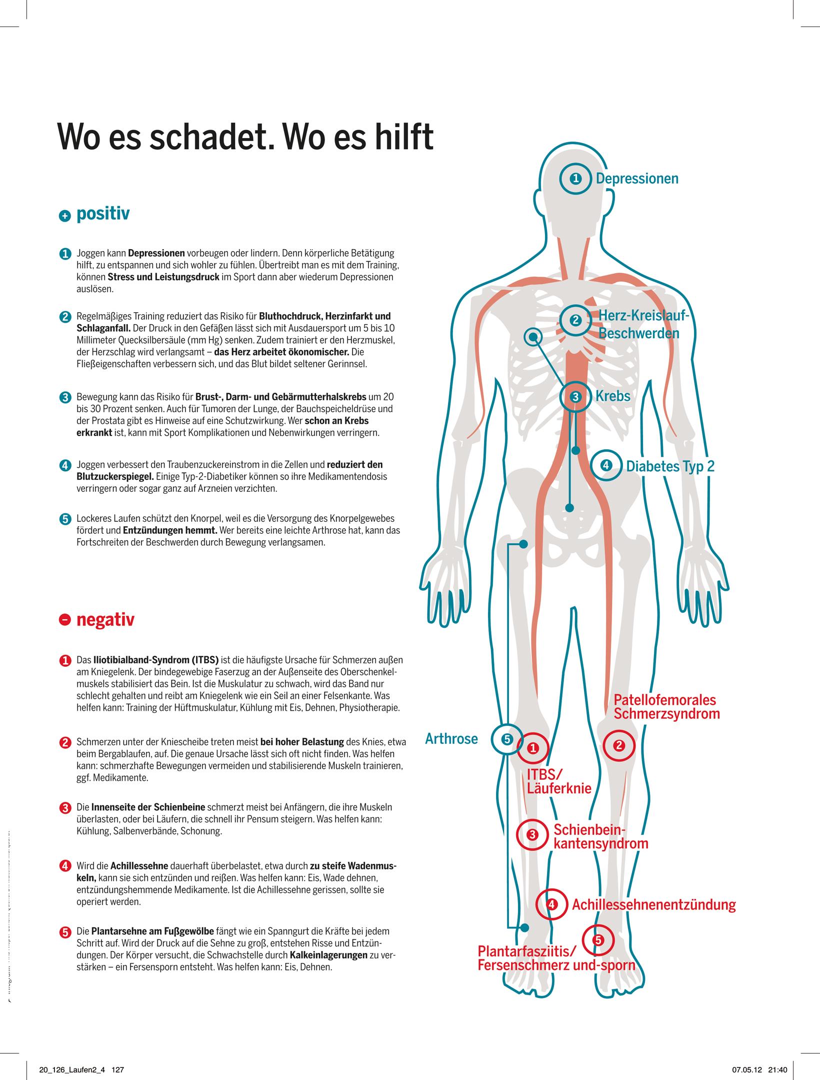 Nett Anatomie Der Hüftmuskulatur Bilder - Menschliche Anatomie ...